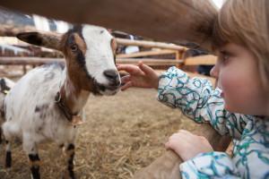 Streichelzoo, Tiershow & Co. sorgen für leuchtende Kinderaugen