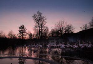 Abendführungen bei Vollmond im Tierpark Bern