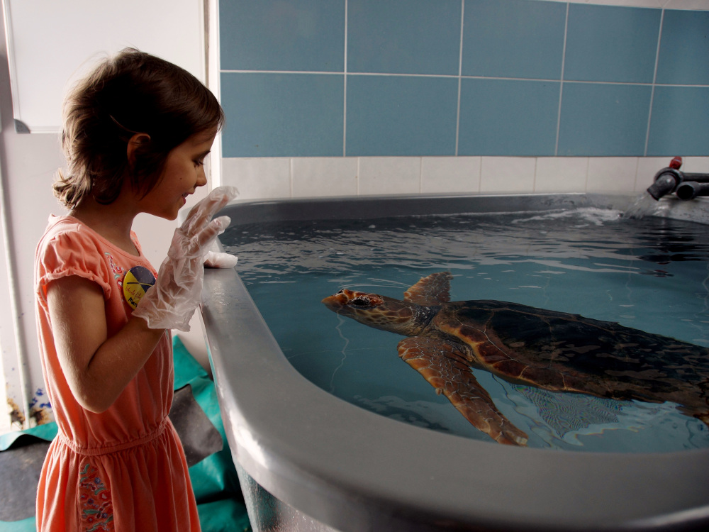 Marissa pflegt Schildkröten.