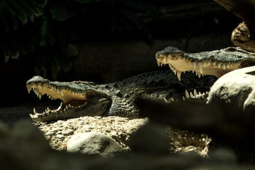 Zoo Basel öffnet am 6. Juni seine Tore