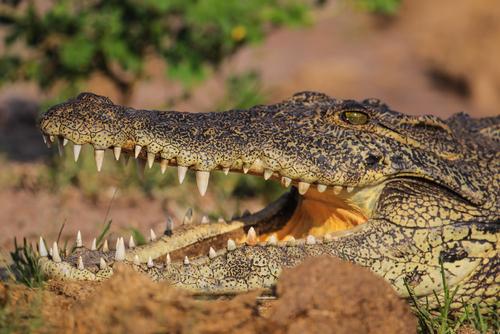 feature post image for Nachwuchs bei zwei Krokodil-Arten im Zoo Basel