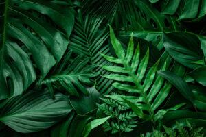 Künstliche Palmen mieten - eine schöne Atmosphäre für Ihre Feier schaffen