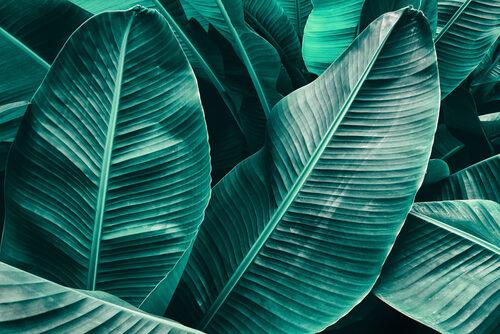künstliche Palmen mieten