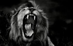 Neubesetzung: Jesse Ritch gibt Löwenmähne weiter an Jan Oliver Bühlmann