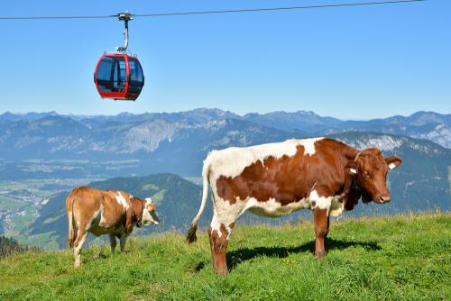 feature post image for KitzSki erhält Gütesiegel für seine Sommerbahnen