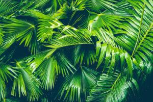 Künstliche Palmen mieten für eine unvergessliche Strandparty